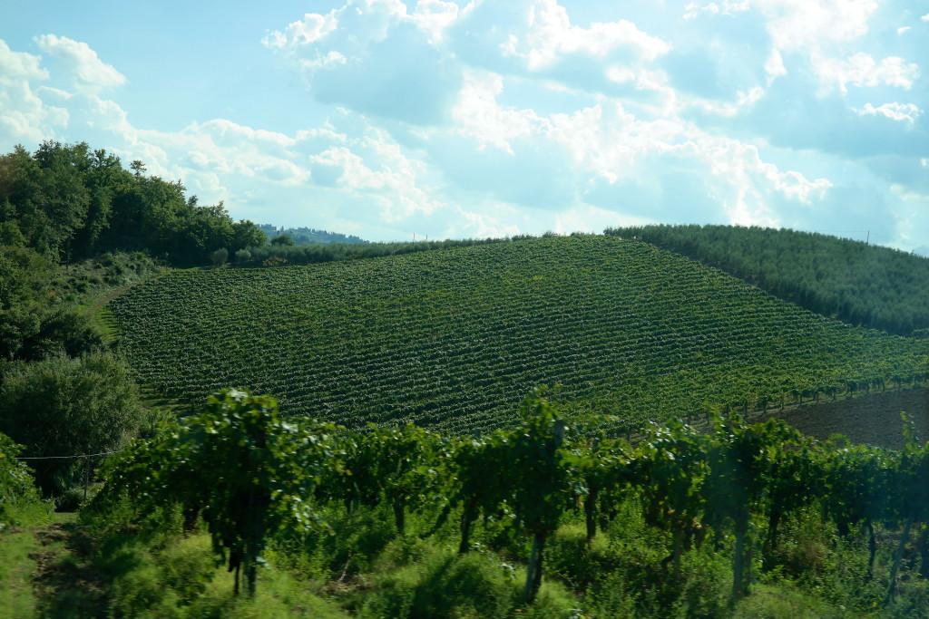 Madison Meltzer Tuscan Vineyard